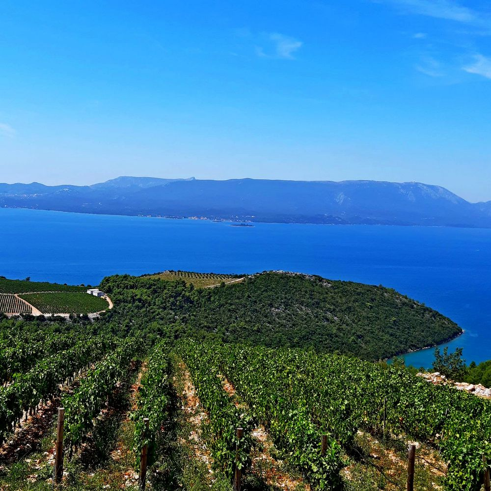 Private Dubrovnik wine tour