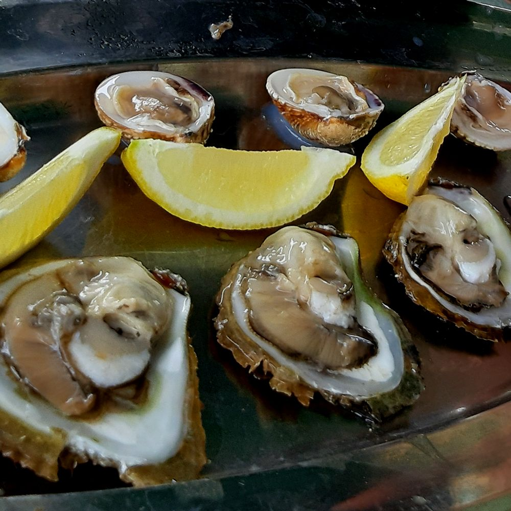 Dubrovnik Croatia fresh Oysters Delivery
